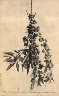 89826 - Curiosité  Végetable      Olives Sur Une Tige - Cultures