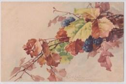 CATHARINA KLEIN - Mûres - Fruit - Branche - N°212 - Klein, Catharina
