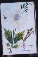 MARGERITE EN RELIEF - Botanik