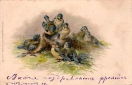 Blue Titmouse - Parus Caerulus - Oiseaux