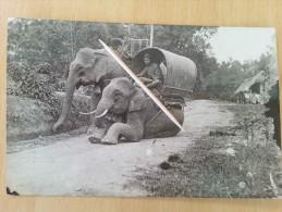 SINGAPOUR _ Eléphants 1938 _Foto Kart _ Malaya Country Live - Malaysia