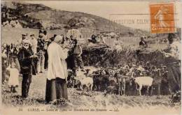 Corse – Scènes Et Types – 34 Bénédiction Des Moutons - France
