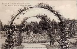 SAVERNE – Roseraie De La Société Alsacienne T Lorraine Des Amis Des Roses De S. - Saverne