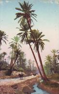 Afrique Du Nord     39    Oasis - Cartes Postales
