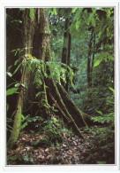 MALAYSIA - SARAWAK FOREST / BORNEO - Malesia