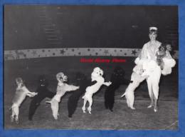 Photo Ancienne - Cirque - Spectacle De Chien à Identifier - Artiste Dresseur Dressage - Caniche Dog Hund - Circus Show - Métiers