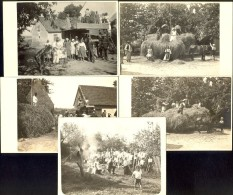 Lot Of 5 Postcard / Work In Field / Postcard Not Circulated, Inscription On Some Of Them - Paesani