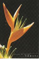 Oiseau De Paradis, Une Fleur De TAHITI - Polynésie Française
