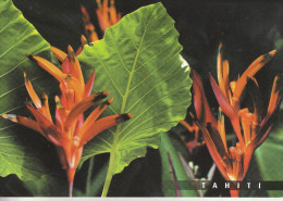 Oiseaux De Paradis, Fleurs De TAHITI - Birds Of Paradise - Flowers Of Tahiti - Polynésie Française