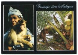 GREETINGS FROM MALAYSIA / KELANTAN / MONKEY - Malesia
