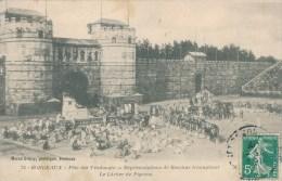 Bordeaux (33 - Gironde) Fête Des Vendanges - Représentations De Bacchus Triomphant - Le Lacher De Pigeons - édition MD - Bordeaux
