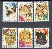 Chats Gatos Cats Katze  Série Complète  Oblitérée   Ref 41 Cuba Tigre Panthère Lion Puma Léopard - Domestic Cats