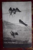 "Lyaux ""Having Rest""  - Swallow  Bird - Old Vintage Postcard - Oiseaux"