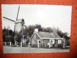 Westouter - Rode Berg - Mont Rouge -  Molen Met Molenhuisje - Moulin Avec Maisonette - Belgique
