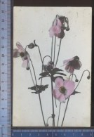 338/728   CPA CARTOLINA POSTALE 1909 FIORI DA CASTIGLION FIORENTINO PER FIRENZE - Fleurs, Plantes & Arbres