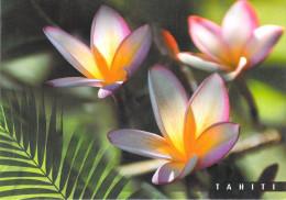 Polynésie Française-Les Iles Du Pacifique Sud - TAHITI   Fleurs De Frangipaniers (CP133) (BOTANIQUE) - Polynésie Française