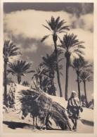 C P S M-C P M---le Maroc Artistique--dans La Palmeraie---voir 2 Scans - Autres