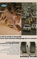 # GOODYEAR G800 1970s Car Tires Italy Advert Pub Pneumatici Pneus Reifen Neumaticos Fiat 500 - Transportation