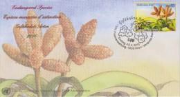 United Nations FDC Mi 641 Endangered Species - Tree Tumbo - 2010 - FDC