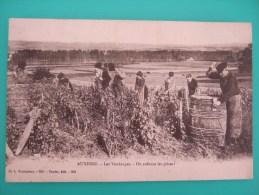 AUXERRE  Les Vendanges  On Enfonce Les Pièces !  1907 - Auxerre
