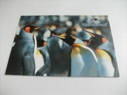 PINGUINI MARINELAND - Animals
