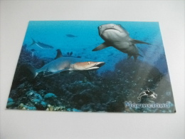 SQUALI SHARKS MARINELAND - Pesci E Crostacei