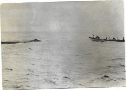 PECHE A LA BALEINE Aux ACORES Baleinière Et Cachalot Pret à être Harponné   - Carte Photo Ruspoli RARE - Pêche