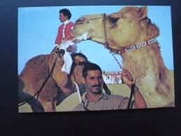 Carte Moderne. APRES UNE COURSE DE CHAMEAUX, Le Gagnant Nourrit Rapidement Son Animal. Circulé 1980 Etat TBon DROMADAIRE - Arabia Saudita