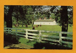 United States , Etats Unis Kentucky Fayette County , Calumet Farm , Horses With Fences - Etats-Unis