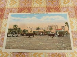 Oxen Hauling Sugar Cane, Cuba - Postcards