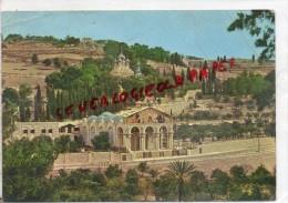 ISRAEL - JERUSALEM  - OLD CITY - BASILIQUE ET JARDIN DE GETHSEMANI - Israel