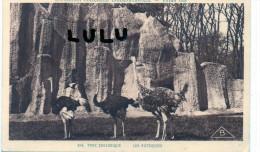 DEPT 75  : Paris  Exposition 1931 Parc Zoologique , Les Autruches ( En Rouge Tuile ) - Exhibitions
