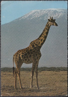 Kenia  East Afrika - Wildlife - Giraffe - 3x Nice Stamps - Kenia