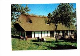 Normandie  - Chaumières Normandes - Vaches Au Pré - 10/10169 Yvon - Vacas