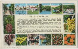 This Is Florida Fruits Orange Banana Pineapple Golf  Windmill Moulin A Vent Envoi A Longny Orne 1926 - Etats-Unis