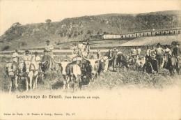 LEMBRANCA DO BRAZIL - UMA FAZENDA NA ROCA - Brésil