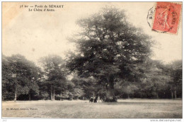 91 - MONTGERON -Foret De Senart - Montgeron