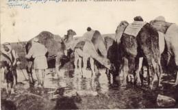Camels - Syrië