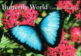 Blue Morpho Butterfly #PC144 - Butterflies