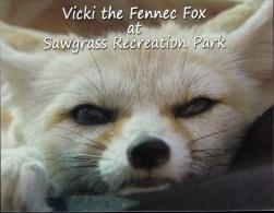 Fennec Fox #PC149 - Animaux & Faune