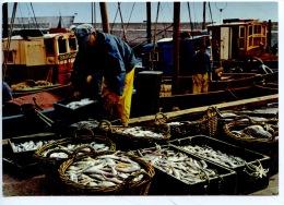 La Bretagne En Couleurs : La Pêche - Le Tri Du Poisson Avant Sa Vente à La Criée (n°801 Jos) - Pesca