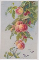 CATHARINA KLEIN - Fruits - Pêches - Papillon - Déposé St.F.Z. N°1162 - Recto Verso - Klein, Catharina