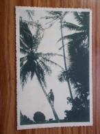 CAROLINES  A La Cueillette Des Noix De Coco  Années 20 - Micronesië