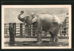 CPA Wien-Schönbrunn, Tierpfleger Et Indischer Elefant - Elephants