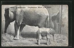AK Wien-Schönbrunn, Elefant Mizzi Und Mädi - Elephants