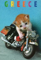 CPM - CHAT - CHATON SUR MOTO - MOTARD - GREECE - GRECE - Coul - Ann 2000 - - Cats