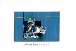 Allons Faire Un Tour ! (chats Chattons à La Chatière) N°24 - Katzen