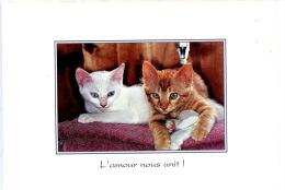 L'amour Nous Unit ! (chats Chattons Blanc Roux) N°25 - Katzen