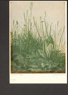 Albrecht Dürer Das Große Rasenstück Karte Von 1958 - Künstlerkarten