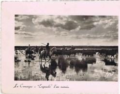 """Cpsm Sur Cadre LA CAMARGUE  """"engasado """" D Un Marais - France"""